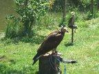 Přijeli i ptáčníci s dravci a měli připravený pozoruhodný program.